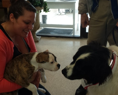 Pet therapy at Country Terrace.