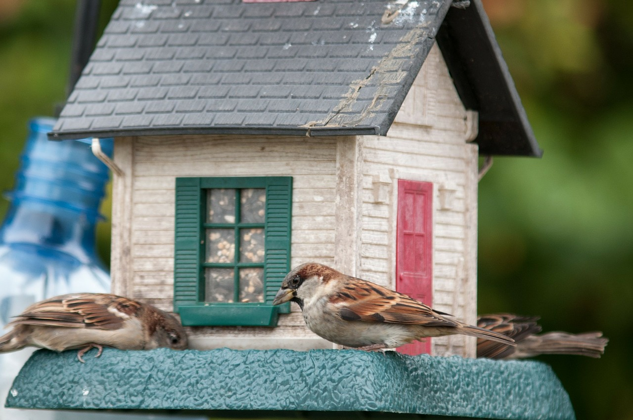 birds-314265_1280